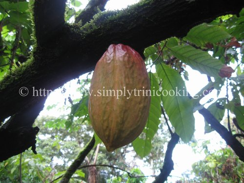 how cocoa is made