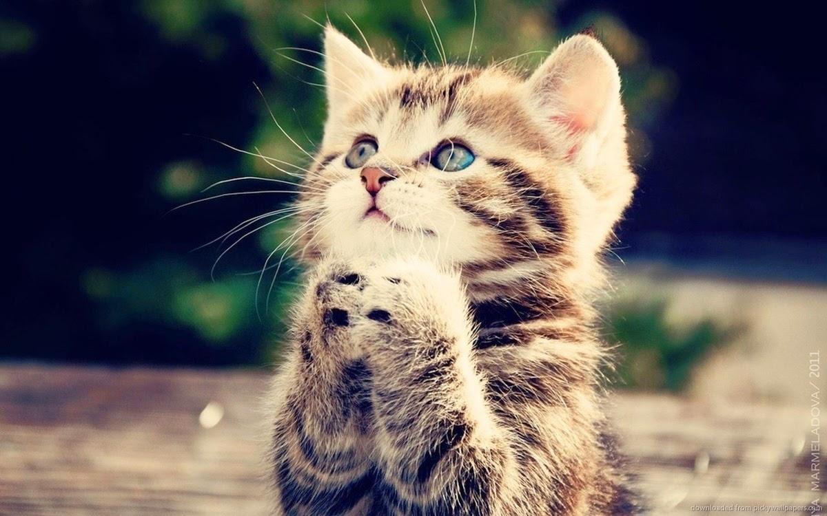 Enam Manfaat Memelihara Kucing Bagi Kesehatan Dan Lingkungan