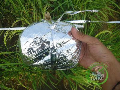 FOTO 2 : Gulungan Pita plastik pengusir burung pipit