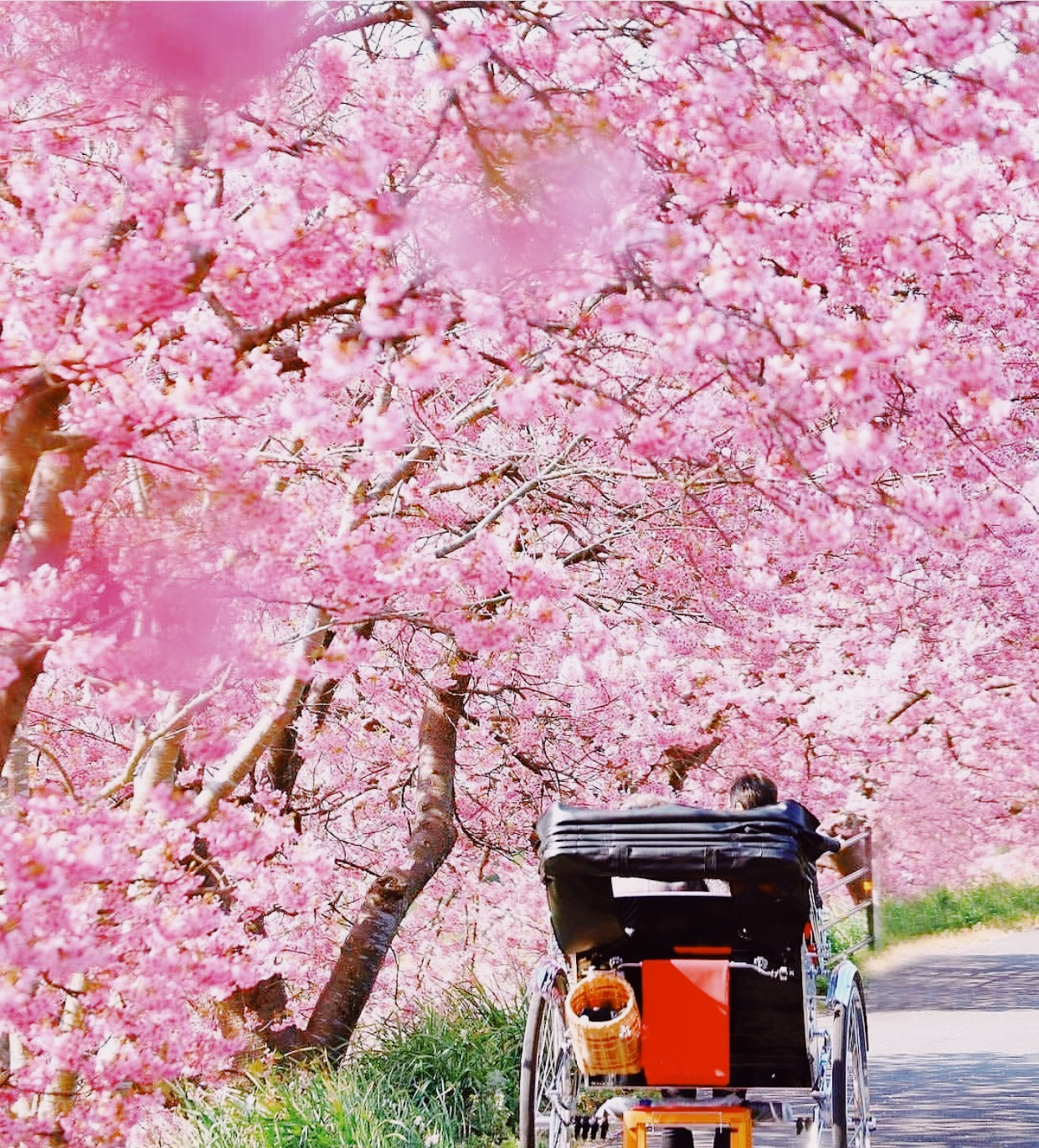 5 most beautiful places to visit in spring, spring pictures, cherry blossoms, indian blogger, british blog, spring in japan,
