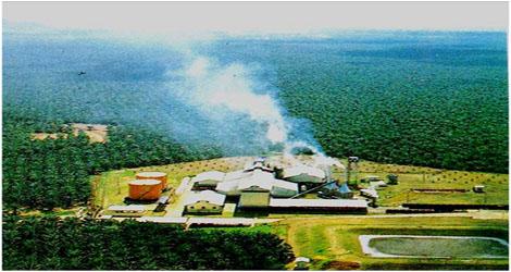 Larangan Ekspor Crude Palm Oil (CPO ) berdampak apda pemasuakan Negara