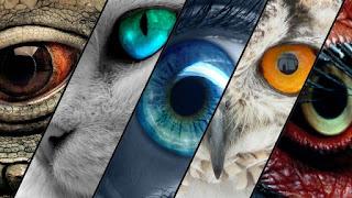كيف تتكيف عيون الكائنات المختلفة لرؤية الأشياء؟