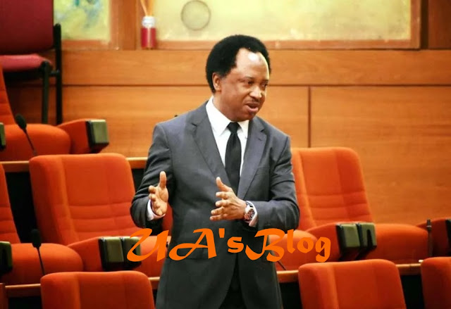 Sycophancy elevated under Buhari govt – Shehu Sani