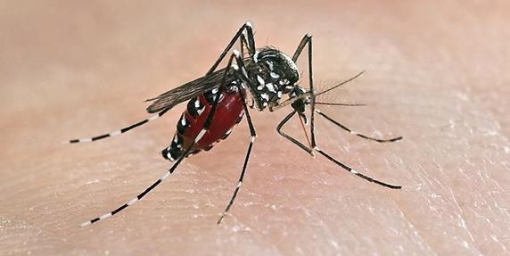Tiada Aedes Tiada Denggi !