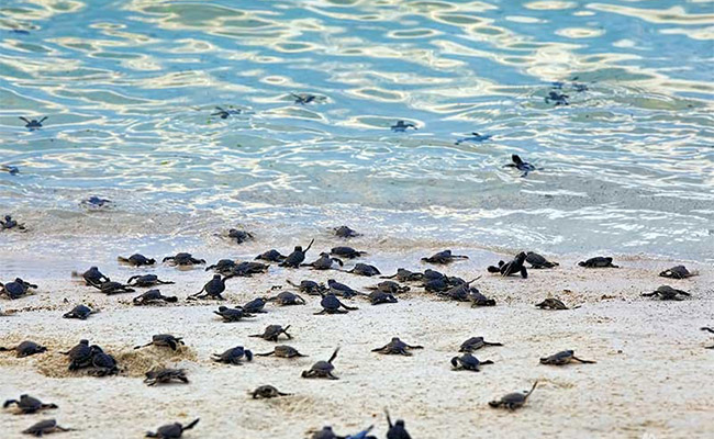 Xvlor.com Turtle Islands