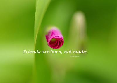 beautiful quotes on life:friends are born, made, with best rose