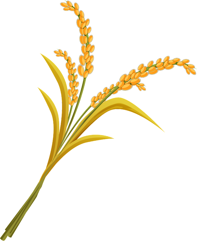 Rice, Wheat, leaf, grass png by: pngkh.com