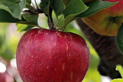 6 Manfaat Buah Apel Untuk Kesehatan