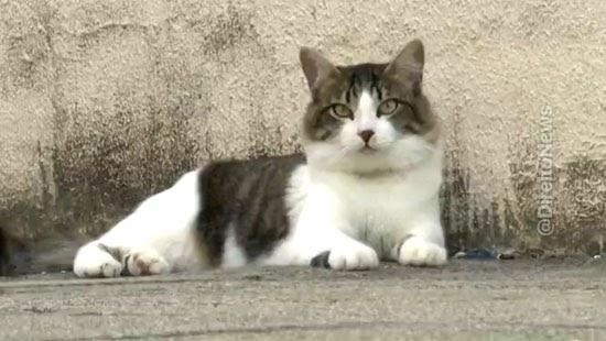 grupo 22 gatos justica condominio animais