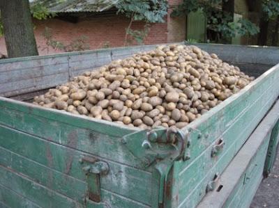 Αποθήκευση και διατήρηση πατάτας