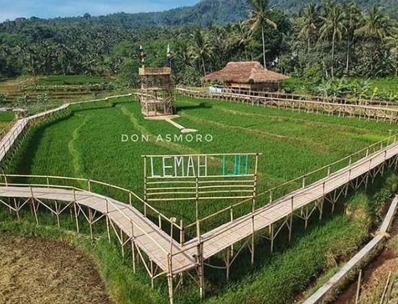 Info Legkap Wisata Jembatan Sawah Lemah Ijo Semarang Petani Adv
