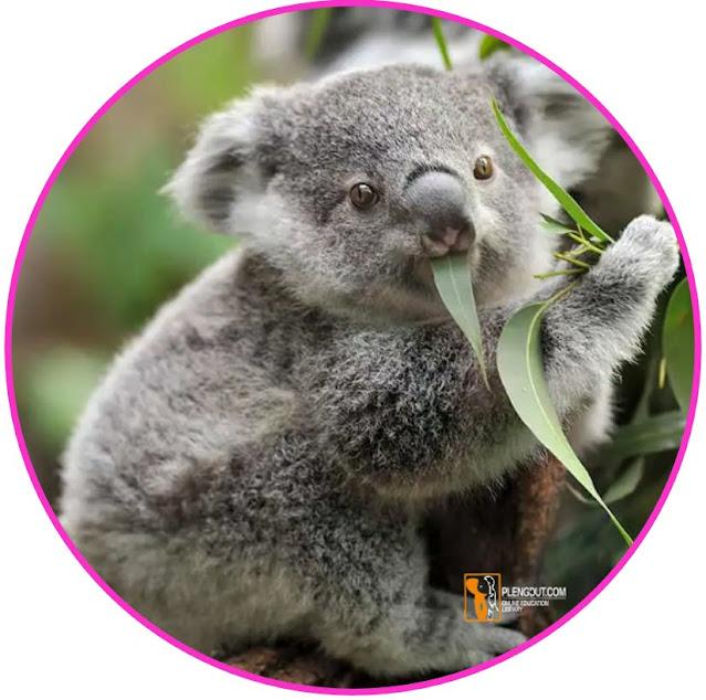 Dalam beberapa kasus ada organisme herbivor yang hanya makan pada jenis dan bagian tumbuhan tertentu. Mayoritas herbivora memiliki tingkat keanekaragaman pada rencana makan mereka, tetapi beberapa dari mereka memiliki menu yang sangat terbatas. Koala (Phascolarctos cinereus), misalnya, umumnya hanya memakan pohon eucalyptus. Panda (Ailuropoda melanoleuca), jarang memakan tumbuhan apa pun selain bambu.