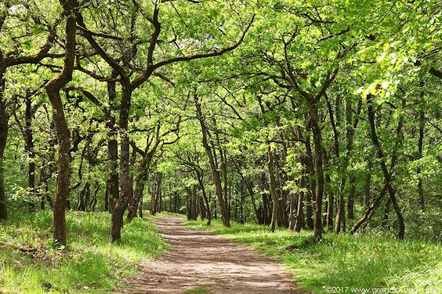 La grande allée du Chemin des Platières, Grands Avaux, Essonne