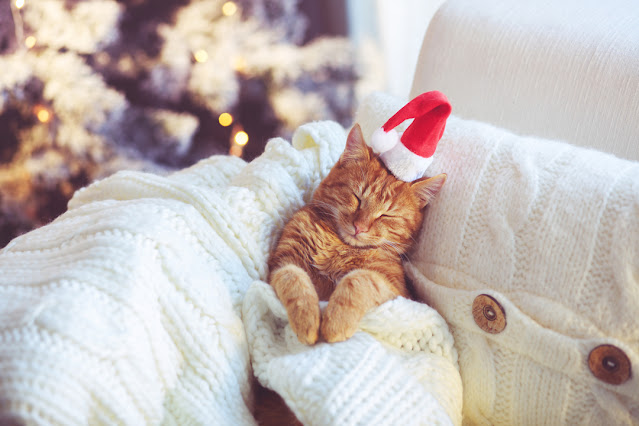 Holiday pet adoption campaign: The season of giving a fur-ever home