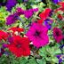 Λουλούδια  , δίνουν χρώμα το φθινόπωρο