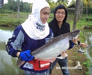 Umpan Pelet Serbuk Ikan PatinKilo Gebrus