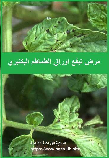 مرض تبقع الاوراق البكتيري على الطماطم SYRINGAE LEAF SPOT