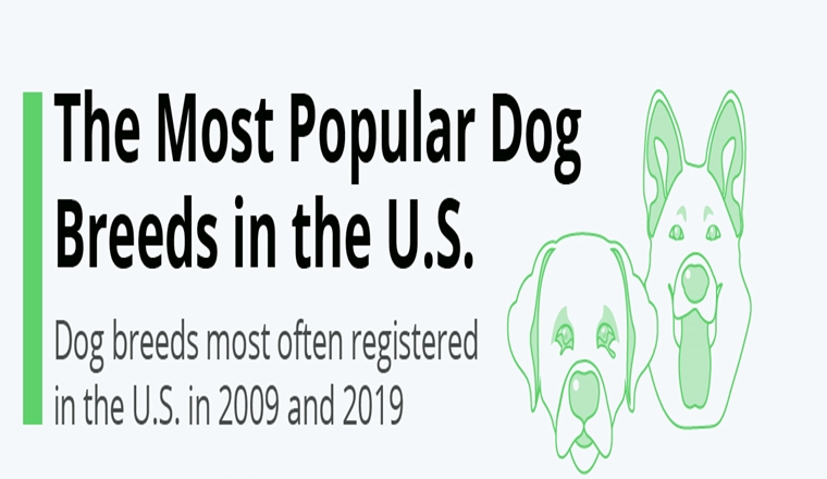 The Most Popular Dog Breeds in the U.S.