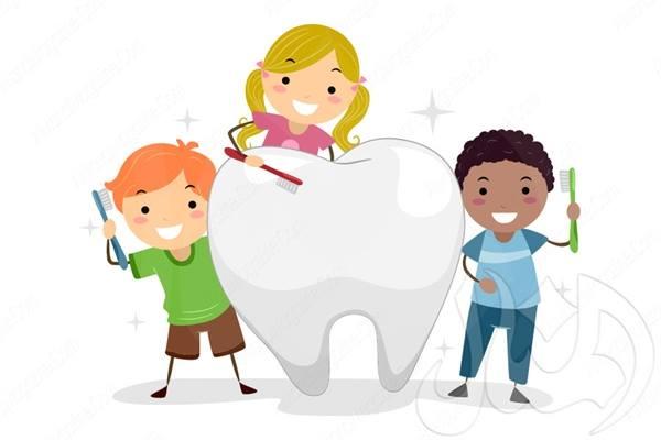 بحث حول وظائف الأسنان