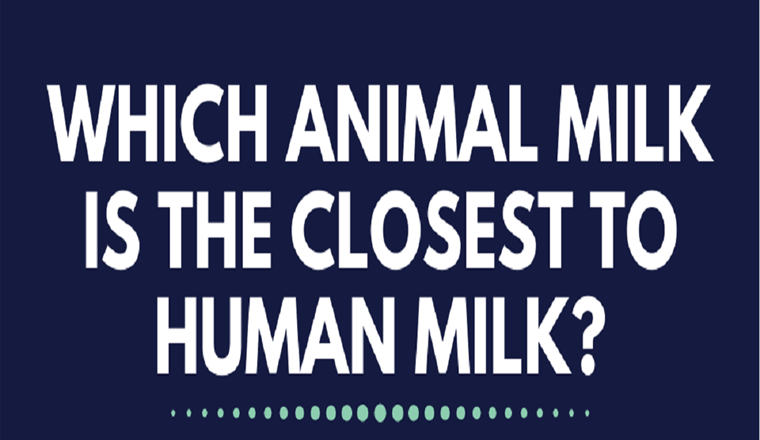 Can Milk From Goats, Buffalos, and Camels Rival the Humble Cow? #infographic
