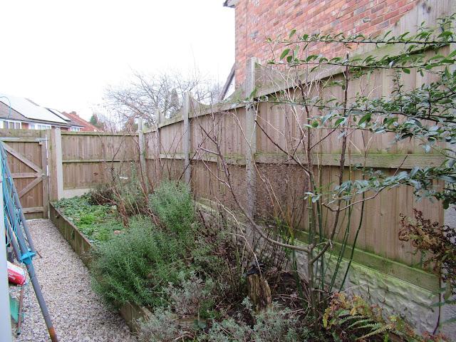 Diary of a suburban permaculture -ish garden, February 2020.  From UK suburban garden blogger secondhandsusie.blogspot.com #suburbanpermaculture #permaculture #ukgardenblogger