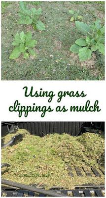 mulching | garden | grass