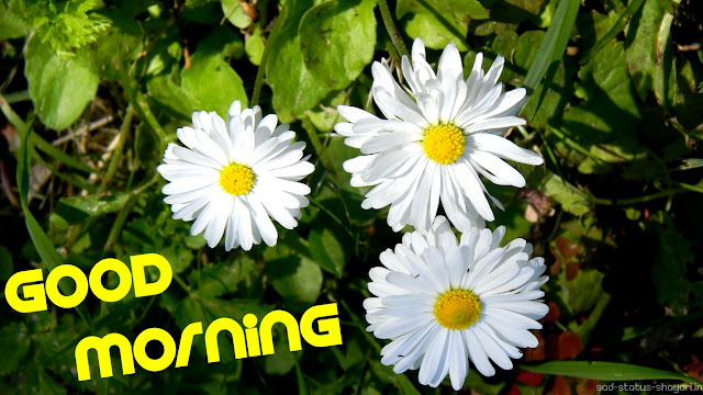 Good morning images white flower