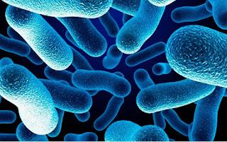 Bacteria Diet