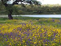 paisaje extremeño en primavera