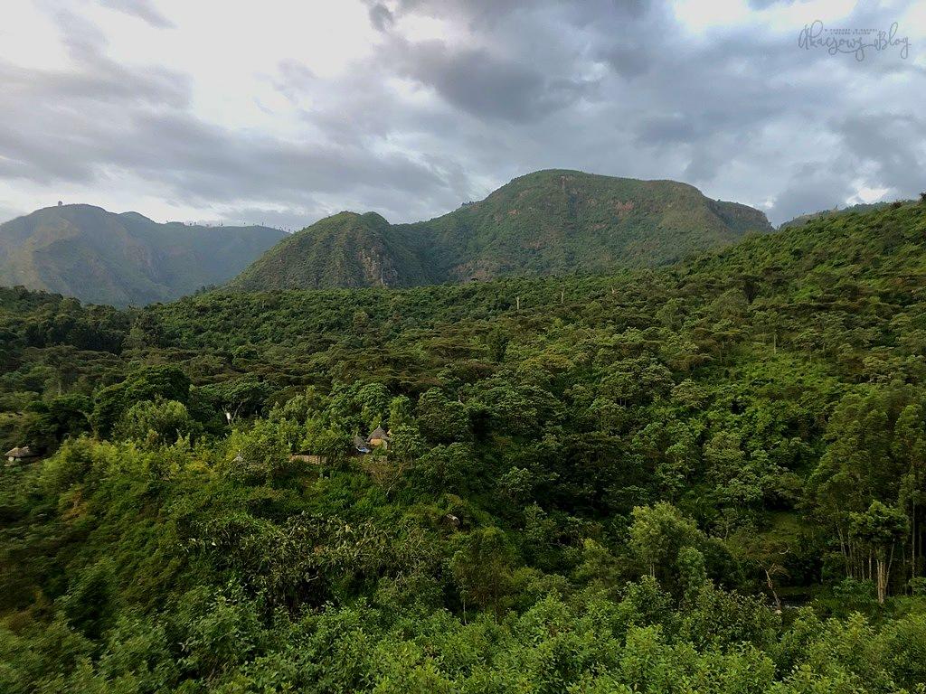 Podróż po Etiopii - część 13 - W lesie Wondo Genet