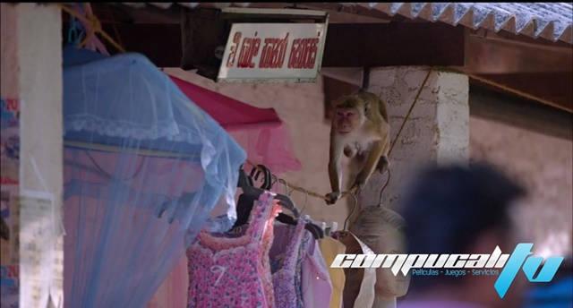 Monkey Kingdom 1080p Latino