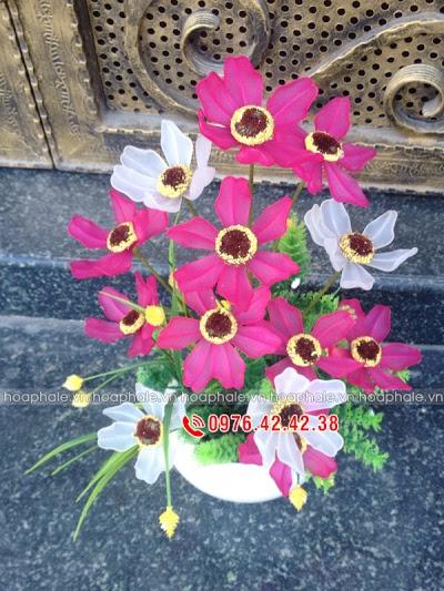 Hoa da pha le tai My Dinh 1