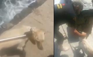 Κρήτη: Ασυνείδητοι πέταξαν σκύλο στη θάλασσα - Πώς σώθηκε από τα κύματα