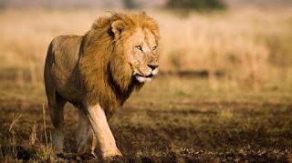 7 hewan paling ganas di dunia