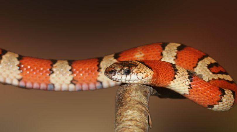 Menyikapi mimpi digigit ular