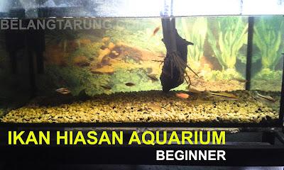 aquarium ikan hiasan air tawar