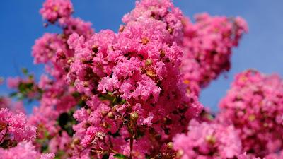 Wallpaper pink flowers, spring, pink bloom