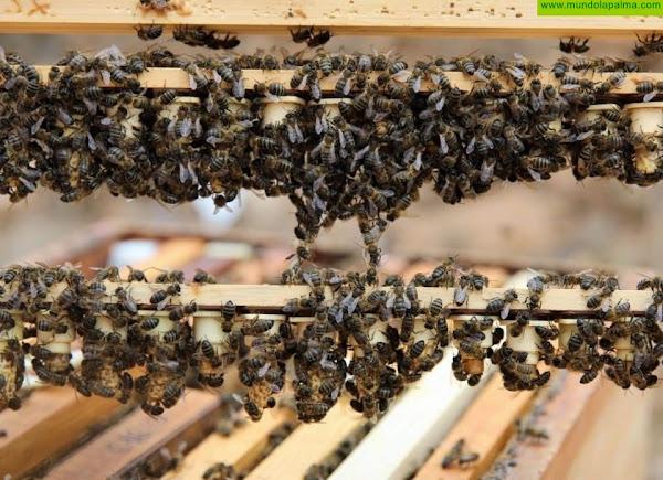 El Gobierno canario convoca ayudas para la producción de miel de abeja negra