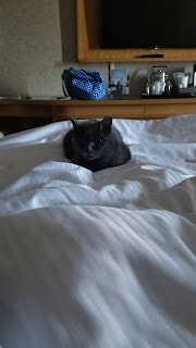 gray cat loafing on bedsheets