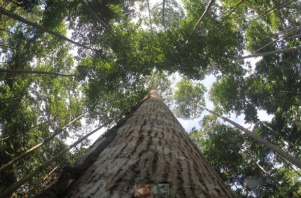 Día de los Bosques Tropicales