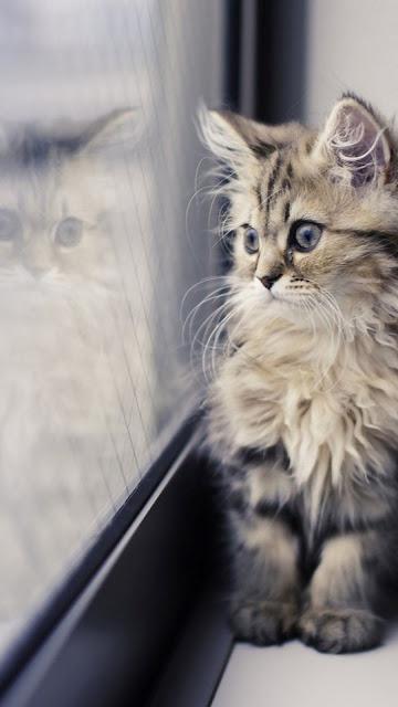 iphone cute cat wallpaper