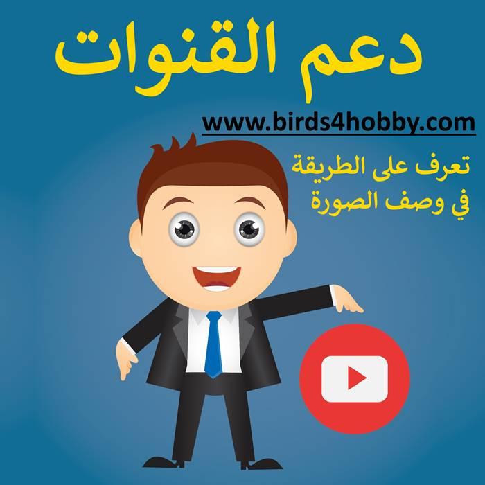 دعم مجاني لقنوات اليوتيوب  الناشئة و الإعلان على يوتيوب مجانا