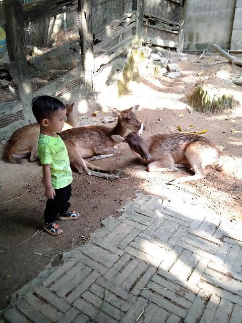 anak kecil bergambar dengan rusa-rusa farm in the city petting zoo