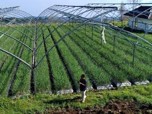 Mengintip Tujuan Perkembangan Teknologi Pertanian Modern di Indonesia