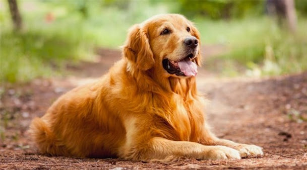 Rüyada köpek görmek ne demek? dişi erkek köpek görmek çoban köpeği görmek köpeği sevmek rüyada köpeğin ısırması, köpek sevdiğini görmek anlamı nedir?