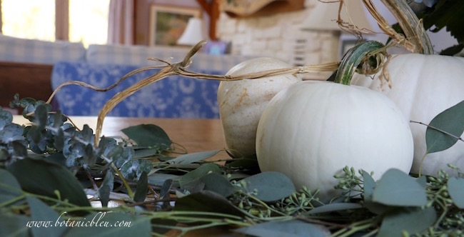 white-pumpkin-long-twisted-stem