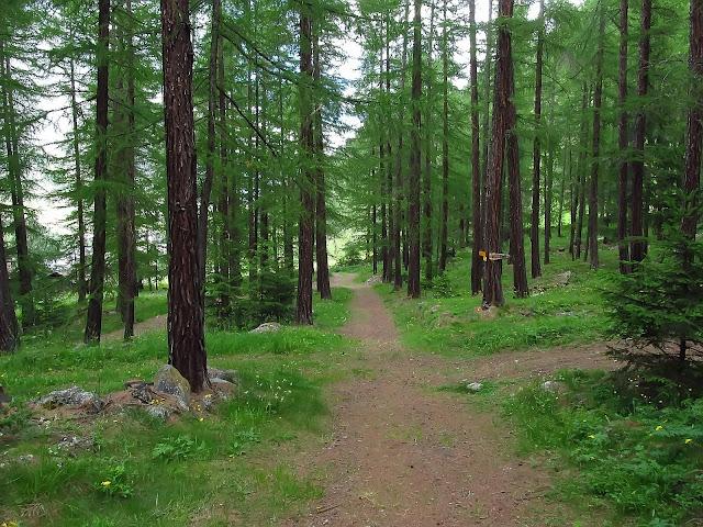 Las w Randzie