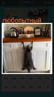 любопытный енот пытается забраться на стол, где находится еда