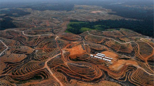 2,6 Juta Ha Hutan Indonesia Untuk Sawit Tanpa Izin Pelepasan Hutan