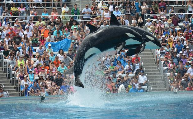 Polêmica da suspensão do show com orcas no SeaWorld